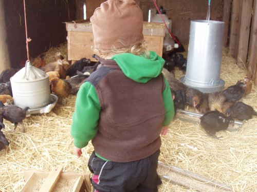 Everett in the Hen Brooder