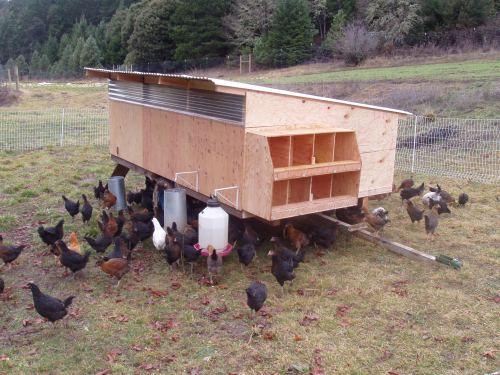 Eggmobile & hens