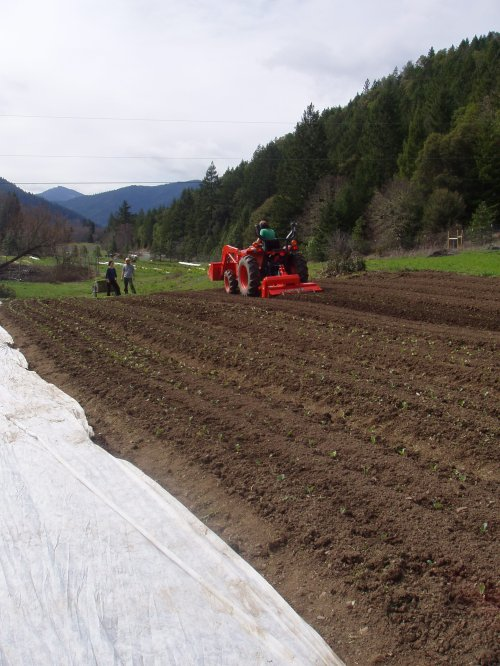 View of the farm and planted broccoli
