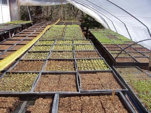 greenhouseapril