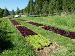 The salad mix beds.
