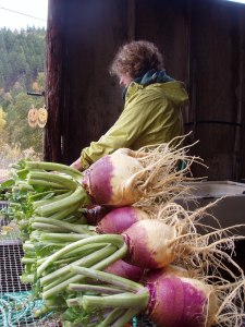 I love rutabaga -- a stalwart vegetable!