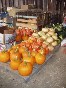Pumpkins and various winter squash.