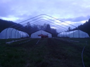 The new hoophouse going up.